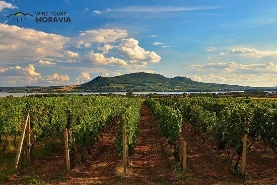 Wine Tours Moravia