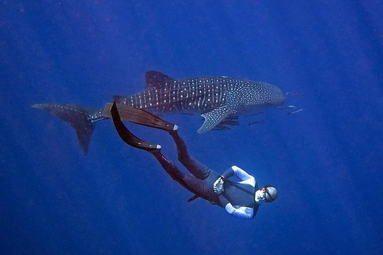 Koh Chang Freedive Trip (Start in Koh...
