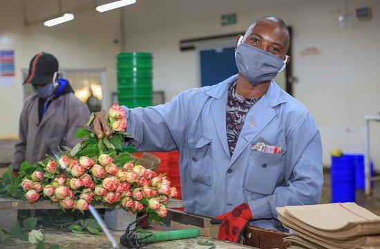 كينيا: Even as we continue flowering the world, ours is the optimism that we will not only spread the Kenyan magic, but tell the diverse Kenyan stories that come with each and every flower #TheMagicAwaits #LiveTheMagic #MagicalKenya  Featuring: Oserian Roses Sian Roses Xpressions Flora Windsor Flowers