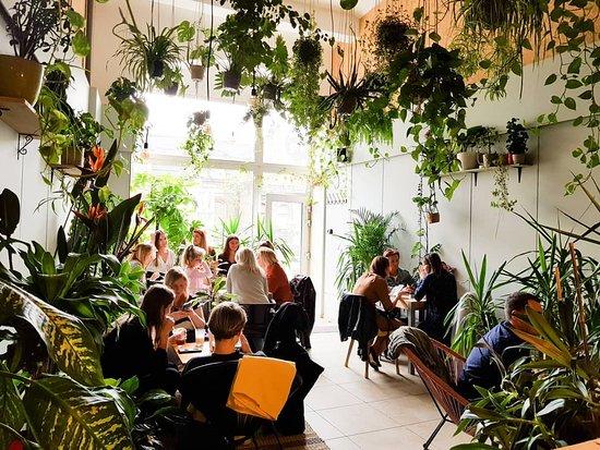 Dżungla w stanie harmonii. Pyszna kawa, dobry sernik i drink. Wszystko w otoczeniu roślin.