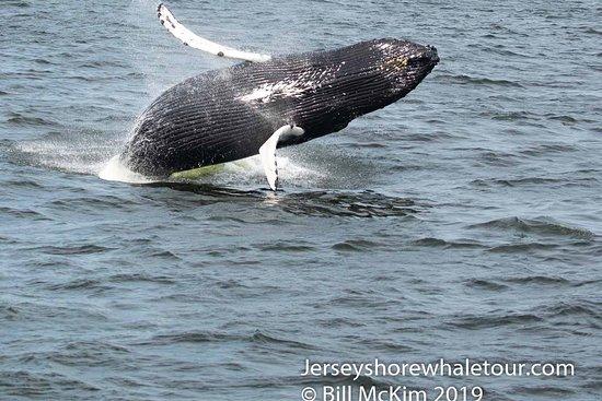 Pictures of Jersey Shore Whale Watch - Belmar Photos - Tripadvisor