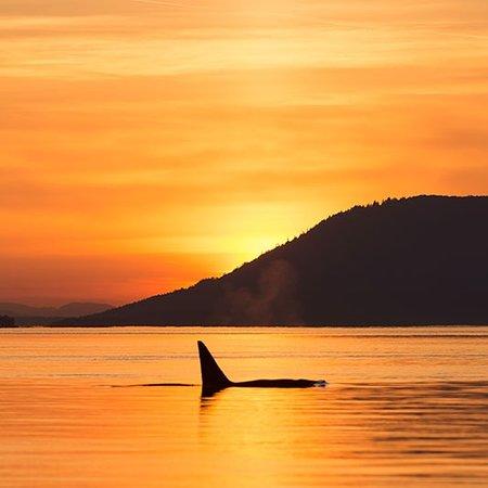 Orcas Island照片