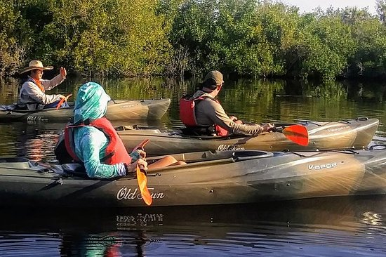Kayak the Everglades Mangrove Forest and Marsh Prairies with Wildlife...