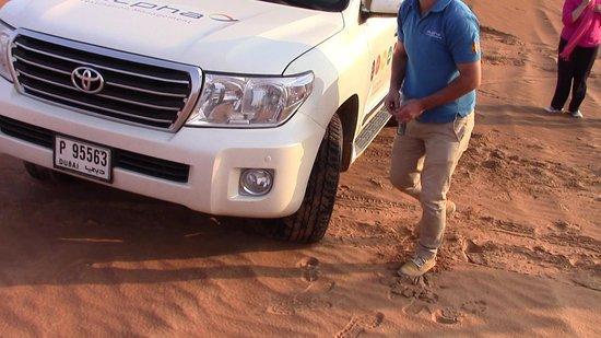 Sahara Arabian Desert Dinner Experience with Transport from Dubai: Divertimento assicurato