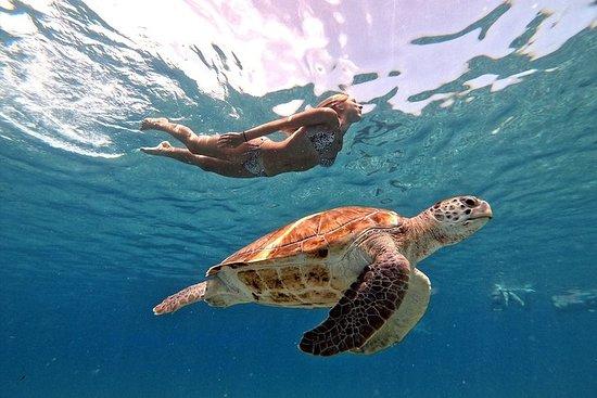 Buceo de superficie con tortugas...