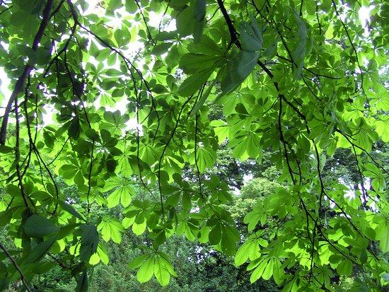 Leuchtend-grüne Blätter...