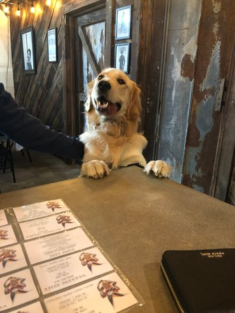 High Ground Brewing: We love our four-legged visitors!