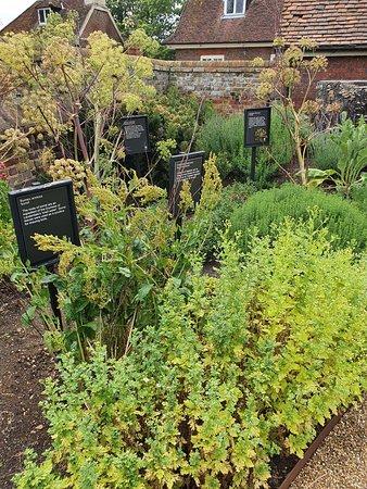 Medicinal Planting
