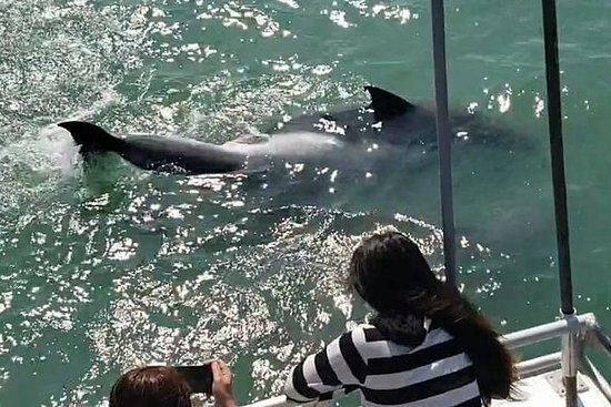 Eco og Dolphin Watch Tours på South...