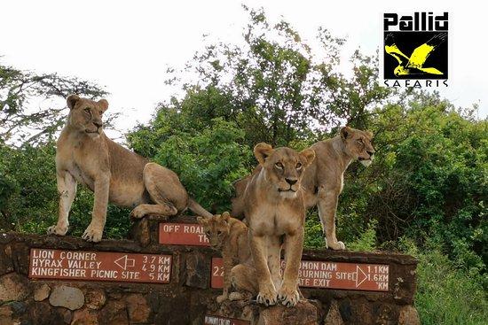Pallid Safaris Ltd