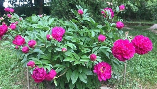 I nostri splendidi fiori