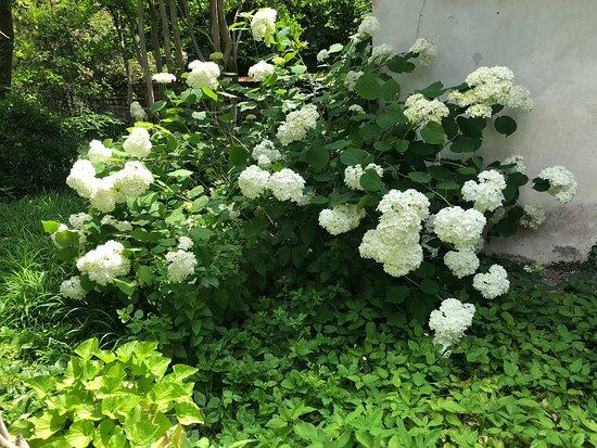 Giardino Storico E Labirinto Di Rose Damascene