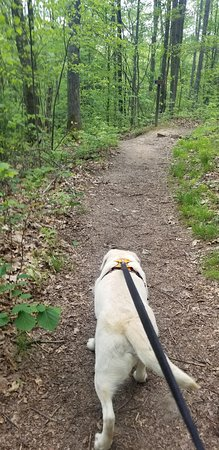 Hiking with my 8 year old lab.