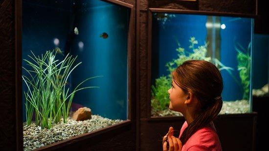 Medicine Park Aquarium and Natural Sciences Center