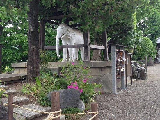 象と厄割リ石