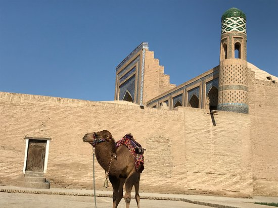 Uzbekistan: un Chameau dans la Citadelle de Khiva en Ouzbékistan ! https://www.google.com/search?q=Raj+Accompagnateur&oq=raj&aqs=chrome.