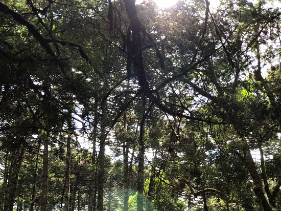Parque Oschin