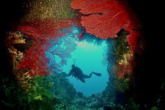 Cozumel Diving Trip