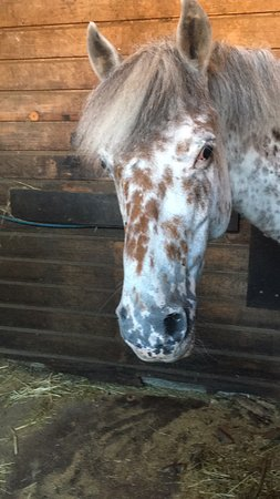Voici presque tous les poneys merveilleux de ce merveilleux centre équestre !