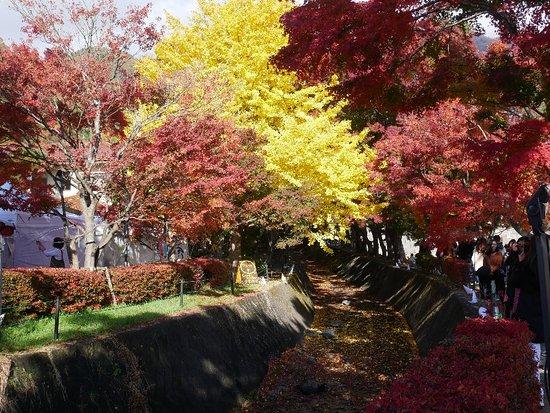 Fuji Kawaguchiko-machi Townsman Pool