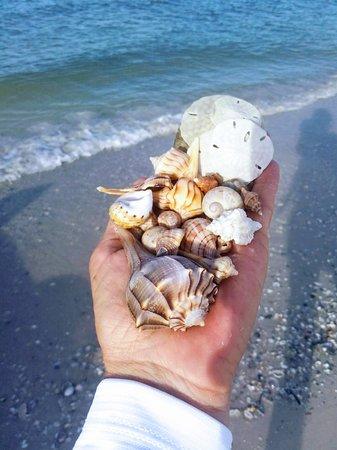 A handful of shells!