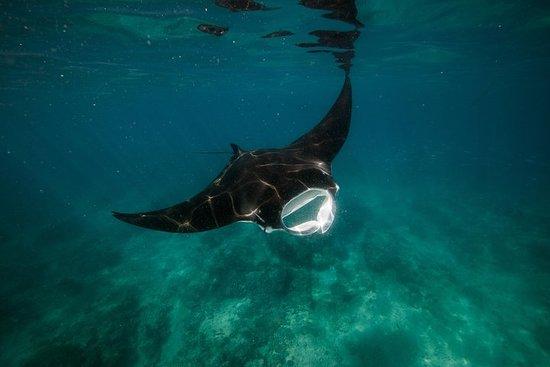 Ningaloo Reef ou Muiron Islands...