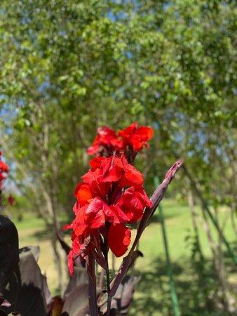 גן הסחלבים אוטופיה