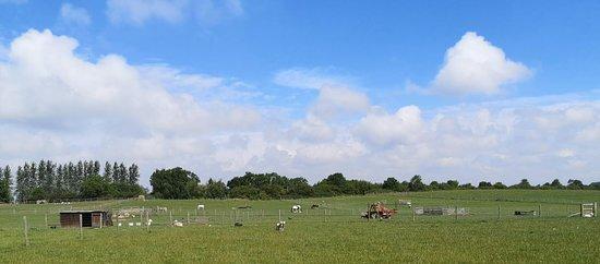 A walk around the fields