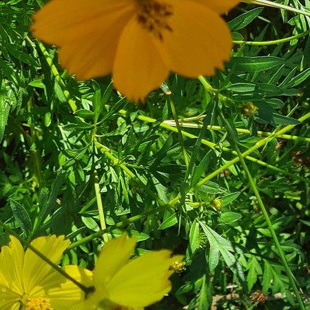 Matale, Sri Lanka: Anurudha arana flowers