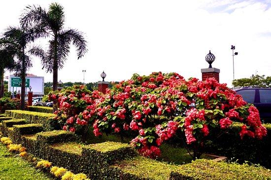 西努沙登加拉省照片