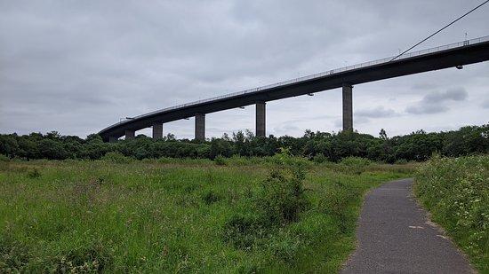 Erskine Bridge from the Saltings
