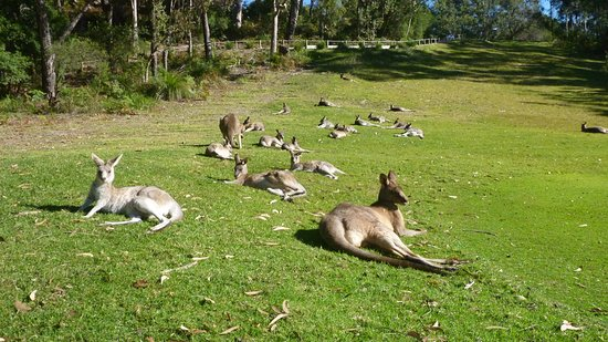 Kangaroo Encounters Guided Tours
