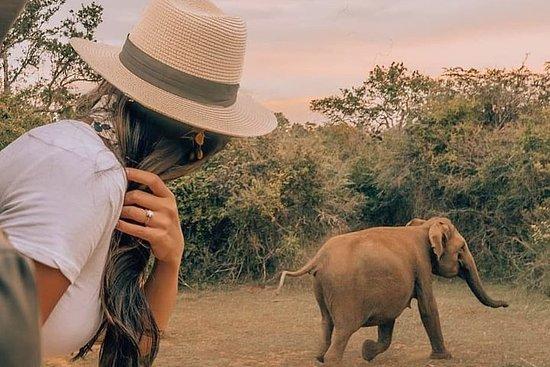 Safari matutino en el Parque Nacional...