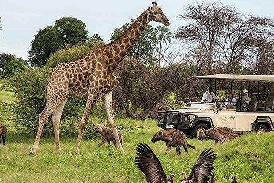 Cape Town - Best of Inverdoorn Safari ...