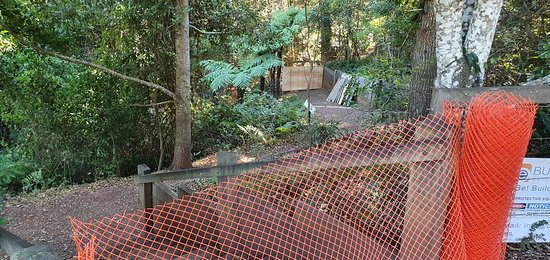 Bunya Mountains National Park walk closed temporarily June 2020