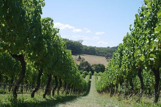 Private wijnmakerij tour