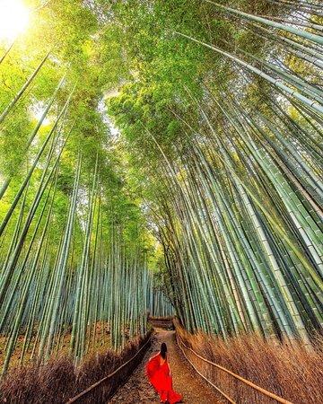 📍Kyoto - Japão l Kyoto, antiga capital do Japão, é uma cidade da ilha de Honshu, famosa por seus vários templos clássicos budistas, jardins, palácios imperiais, santuários xintoístas e casas de madeira tradicionais. Ela também é conhecida pelas tradições formais, como o jantar kaiseki, com vários pratos específicos, e as gueixas, geralmente encontradas no distrito de Gion. l  📸@cbezerraphotos