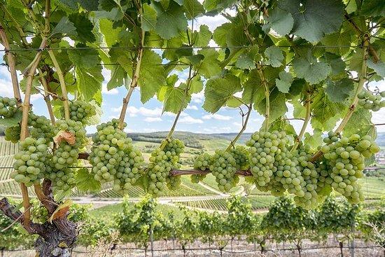 Visite des vins de la vallée de Sonoma...