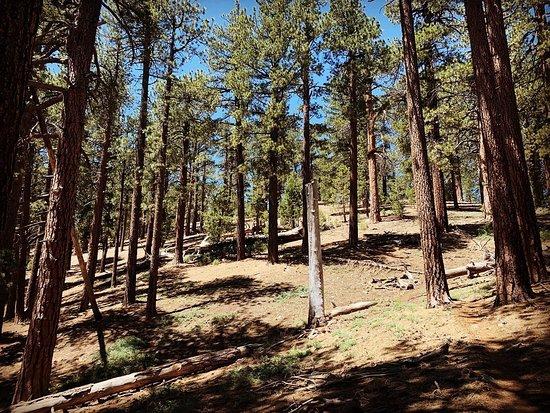 Mount Pinos (Frazier Park, CA — 06.18.20)
