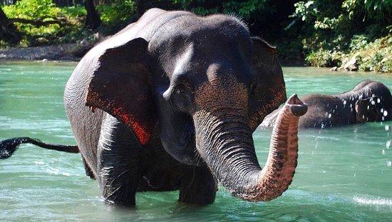 Elephant à Tangkahan - Sumatra