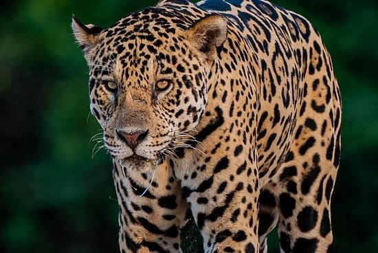 Jaguar extreme 8 nights