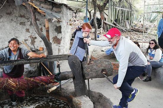 Visite privée de la route du Mezcal avec boissons ancestrales