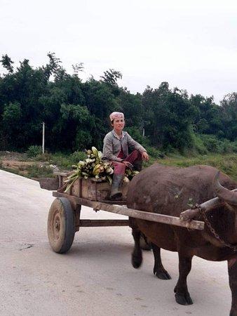 Dong Du Banana Farmstay