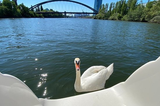 Frankfurt Explore Bird & Marine...