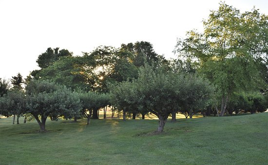 White Post, VA: Fruit orchard in the early morning