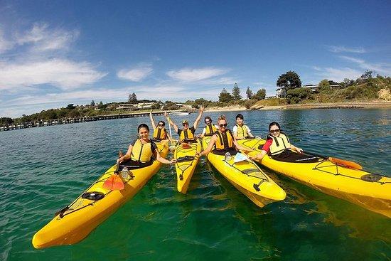 Mornington Peninsula Kayak Coastline Tour du Sanctuaire des dauphins