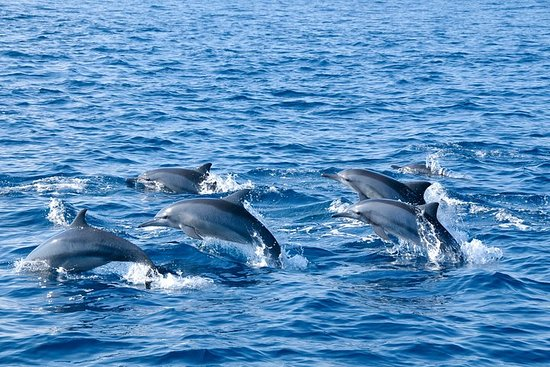 Dolphin and Whale Watching Kalpitiya