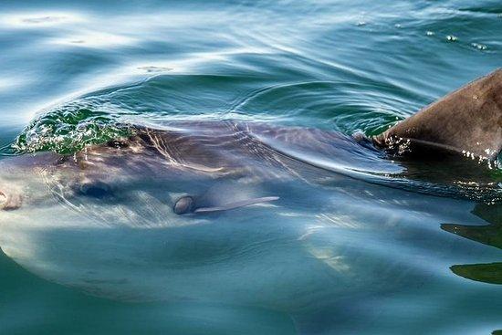 Combo Marine Wildlife Cruise & Cape Of ...