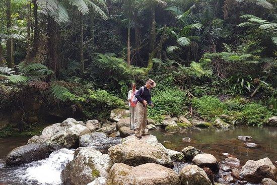 Limited group Gold Coast Lamington National Park Tour