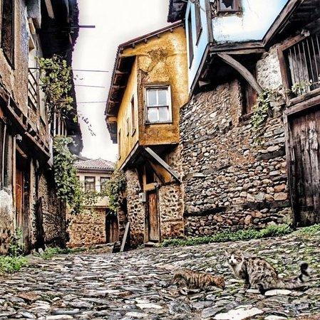 Turkey: Turchia 63